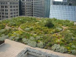 Intenzivni zeleni krov