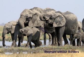 UMass Amherst ecologists help analyze data for Elephants Without Borders