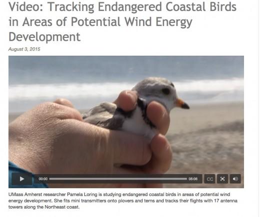 tracking endangered coastal birds