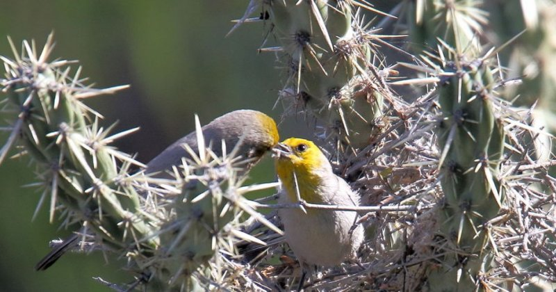 Phoenix homeowners help birds — with landscaping