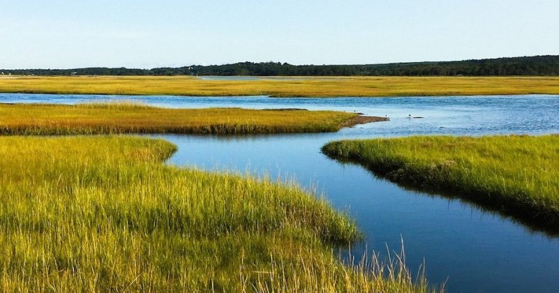 A new view of salt marshes