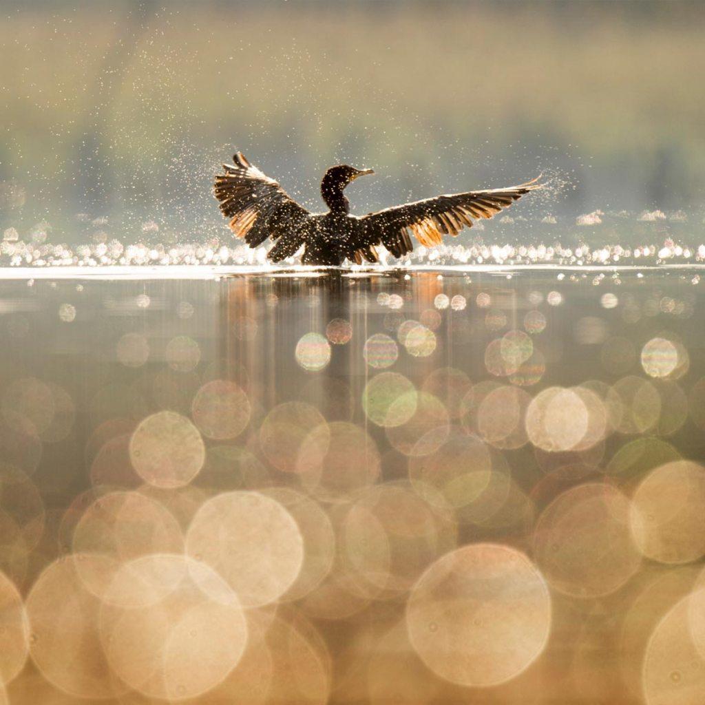 Дбайте про природні екосистеми, озеро баклан
