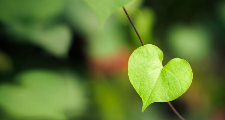 https://i0.wp.com/ecoalpispa.com/wp-content/uploads/2019/02/green-valentines-day-gifts1.jpg?resize=750%2C400&ssl=1
