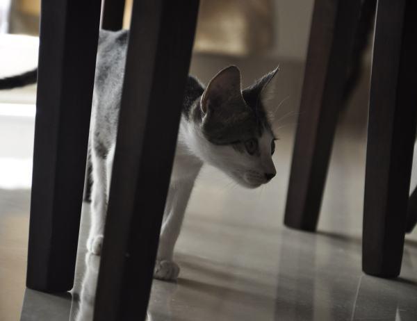 My cat, Anouk