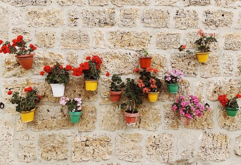 set up your vertical flower garden on a wall