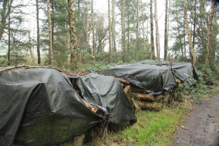 We still have lots of timber left from our first thinning in Jan 2009