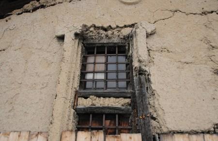 Kura in decline, photo and permission Su Grierson