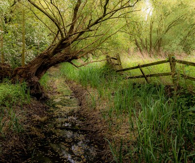 priory-country-park_ta-13
