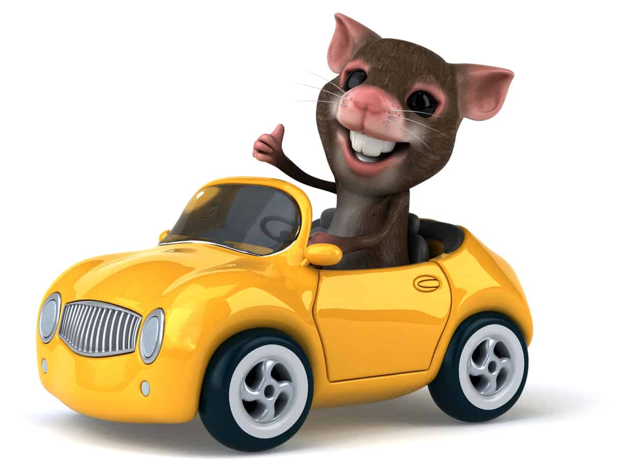 Addressing the Dilemma of a Rat in Your Car | Eco Bear