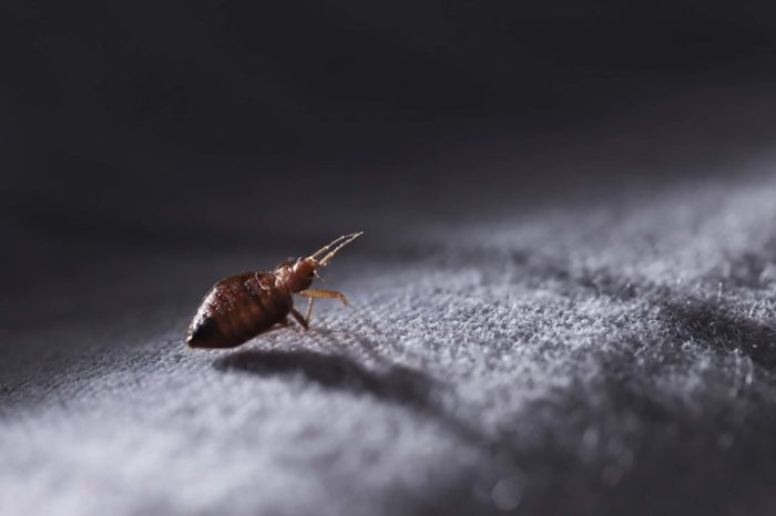 If-You-Dont-Want-to-Bring-Bed-Bugs-Back-From-Vacation-Stop-Doing-This_514911577-Akos-Nagy-760x506