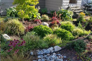 Photo of a rain garden.