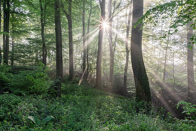 sunlight shining through trees in a forest