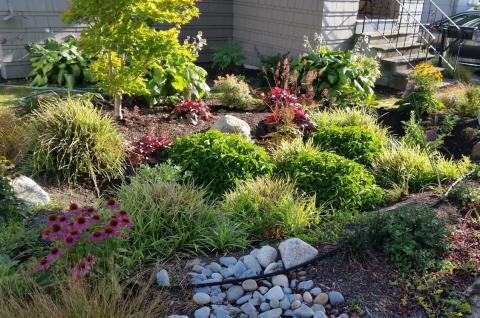 a landscaped rain garden