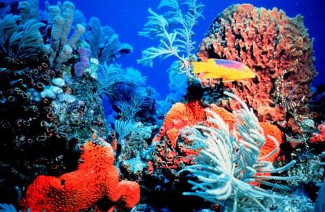 coralreef