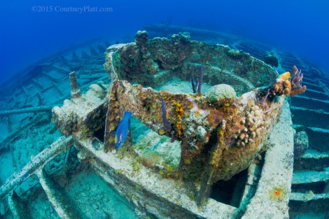 The Cali Shipwreck and reef is located in 10 to 30 feet of water immediately adjacent to the base of the cruise ship landing and will be completely smothered by silt during dredging operations if the cruise berth goes ahead as planned.