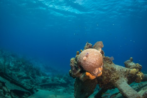 grand-cayman-harbour-wreck-of-the-balboa-healthy-brain-coral-grows-on-shattered-wreck-no-watermark