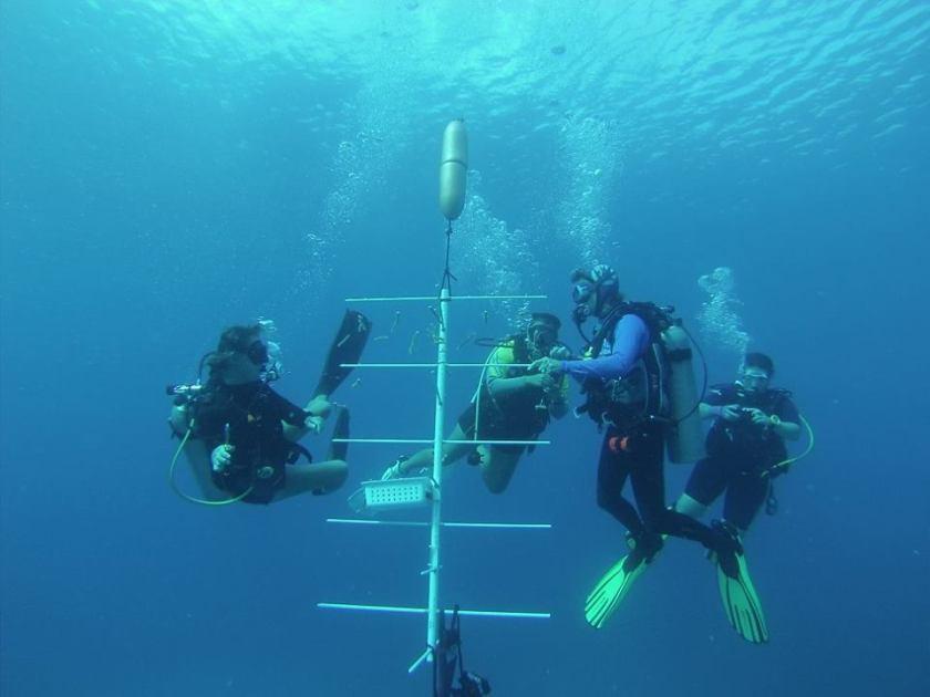 grand cayman eco divers coral tree nursery