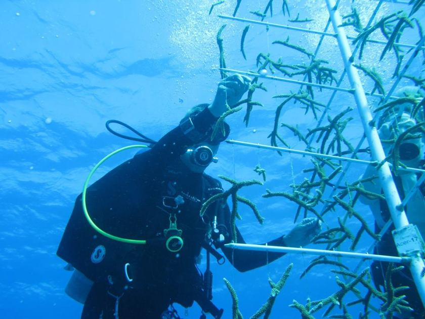 coral reef recovery program cayman islands