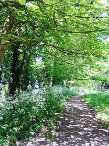 Dappled light path walk - Shilton