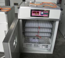 Hatching incubator for 264 capacity with auto functioning