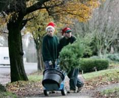 041224_rent_trees_hmed_12phmedium.jpg