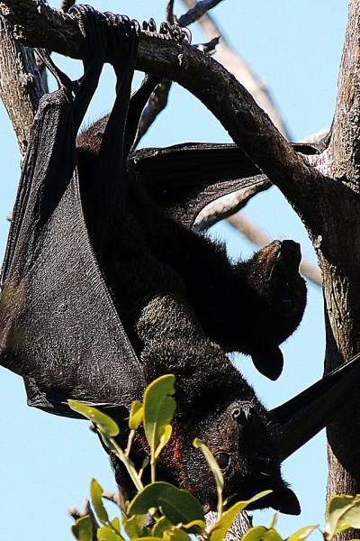 The Black Rock Desert Trilogy Teaches Kids About Bats