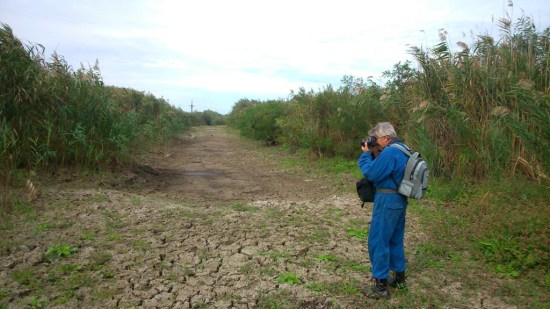 Пересохла ділянка єрику «Застійний» перед початком робіт із відновлення екосистеми. (Нижньодністровський національний природний парк/Володимир Губанов)