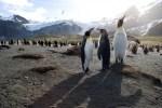 Чому Україна блокує  збереження морів Антарктики?