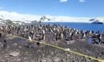 Антарктичні пінгвіни на картах Google