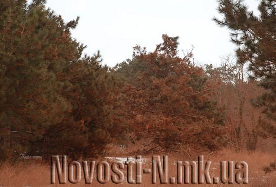 На Миколаєвщині ліквідовують розпилення червоного шламу