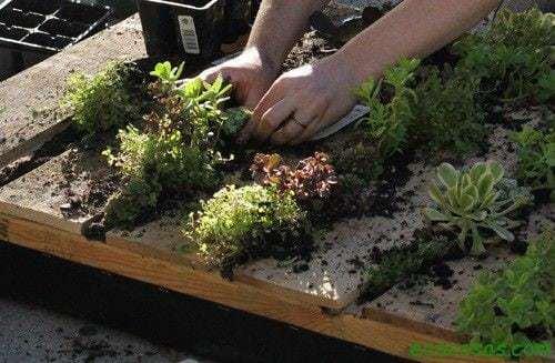 pallet garden step8 Jardín vertical reciclando un palé