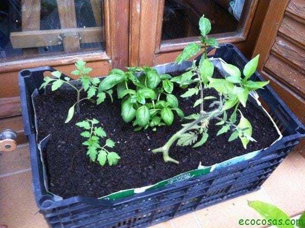 IMG 1072 Como cultivar con macetas y no morir en el intento (Segunda parte)