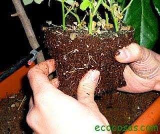 manos tierra Cultiva un huerto y vive mas años