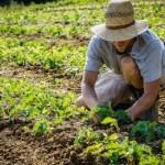 Agricoltura, Molinaro (Lega): «58milioni di euro fermi nelle casse della Regione»