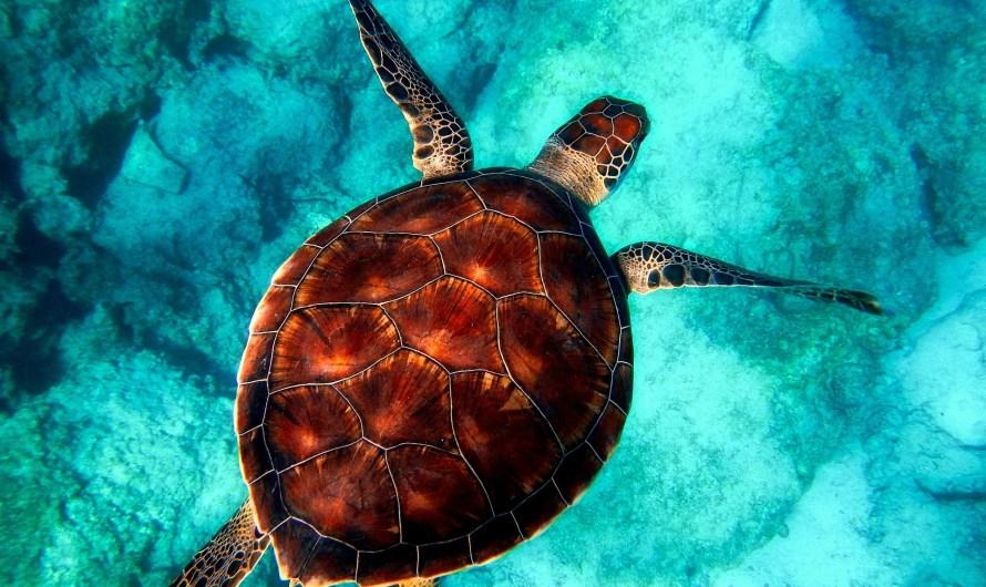 Żółwie przetrwały 255 milionów lat, teraz grozi im zagłada