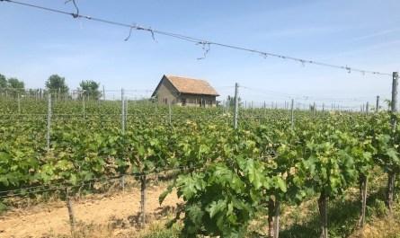 Wina naturalne biodynamiczne i organiczne