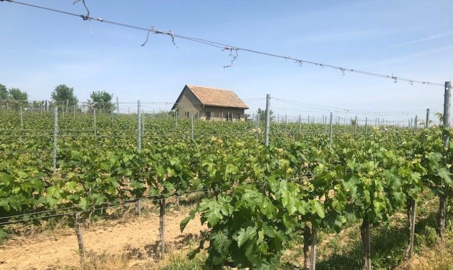 Wina naturalne, biodynamiczne i organiczne – czy wiemy co pijemy?