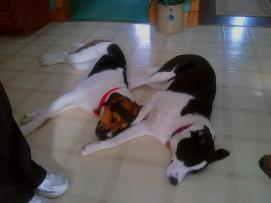 The inseparable duo that became Fletcher and Lucee