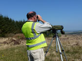 Bird-Surveys