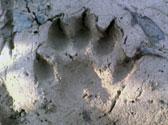 Mammal surveys (2)