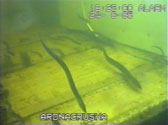 eel-video