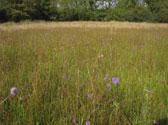 Marsh-fritillary-surveys
