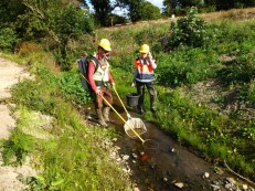 Fish translocation on the N11 project