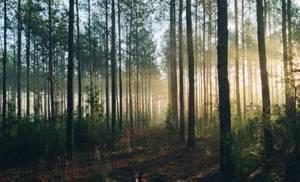 Symbolbild für Meditation im Wald