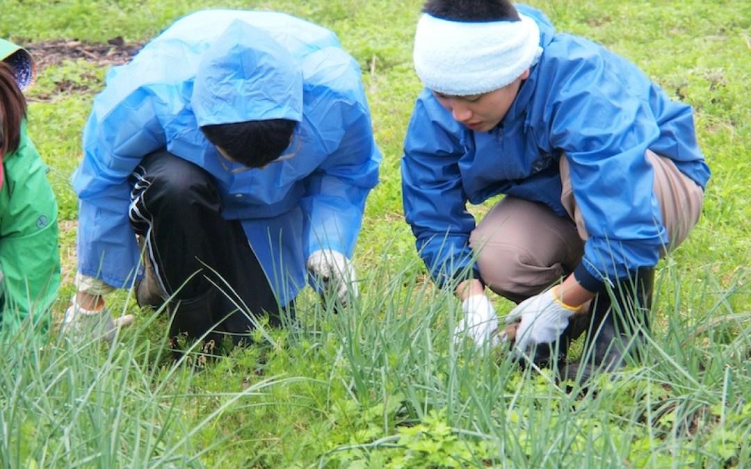 村おこしボランティア体験記【中之島・2012年3月2日〜11日】