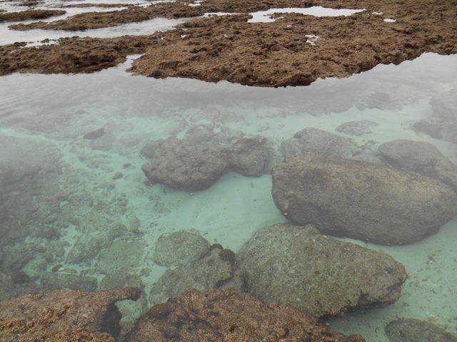 中之島の海は透明感がすごくてとてもきれい