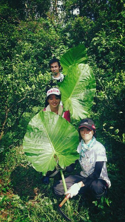 村おこしボランティア【沖縄やんばるコース】で森にとけこむ参加者たち