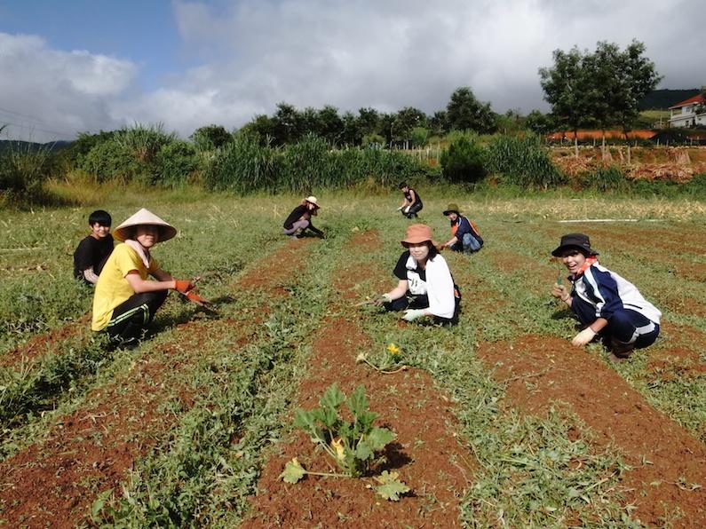 村おこしボランティア【ベトナム ダサ村コース】で一斉に草刈りをする勇者たち