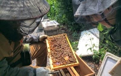 空き家周りの掃除と養蜂の二手に別れて作業