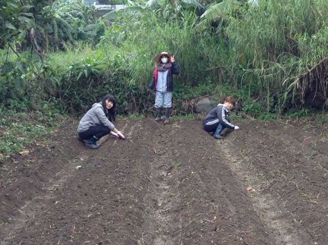 今日は、らっきょう・レタスの植え付け作業!